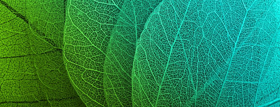 Mindfulness Based Stress Reduction - incredible detail in leaf macro